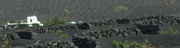El Chupadero, Lanzarote: the bleak, volcanic vineyards